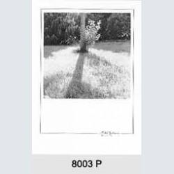 8003 P