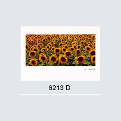 6213 D